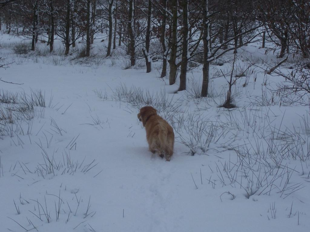 Dog Friendly Hotel Swansea Wales Craig y Nos Country Park Jack the dog in thick Winter Snow