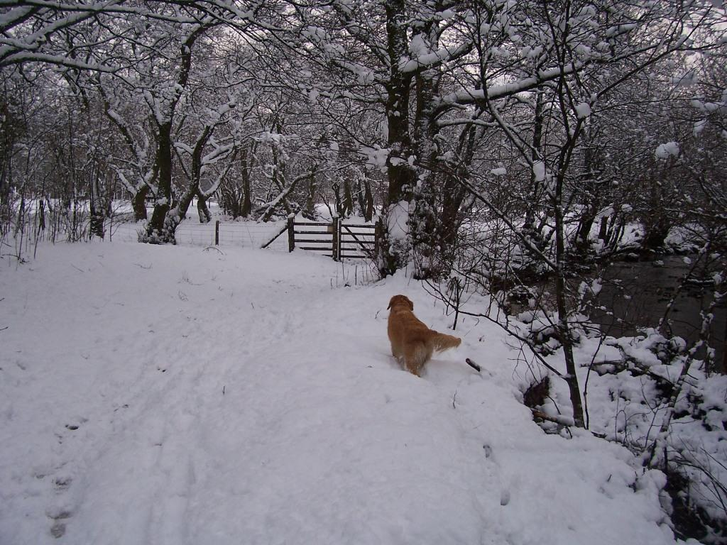 Dog Friendly Hotel Swansea Wales Craig y Nos Country Park in Winter Snow