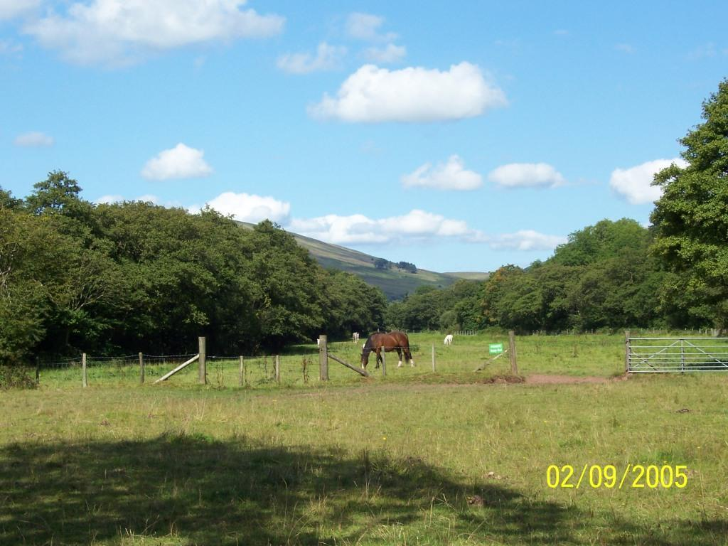 Dog Friendly Hotel Swansea Wales Craig y Nos Country Park horse fields in September