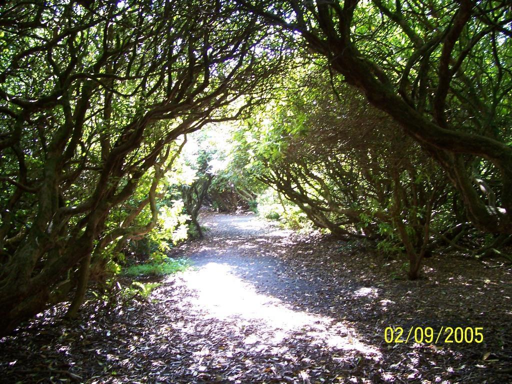 Dog Friendly Hotel Swansea Wales Craig y Nos woodland path with arched branches over path at Country Park in September