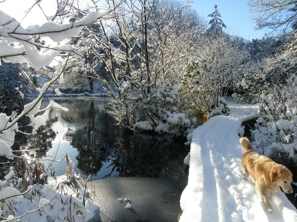 Dog Friendly Hotel Swansea Wales Craig y Nos Country Park dog walks on boardwalk covered in Winter Snow