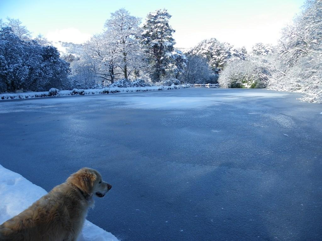 Dog Friendly Hotel Swansea Wales Craig y Nos Country Park Jack the dog looks over frozen lake covered in Winter Snow