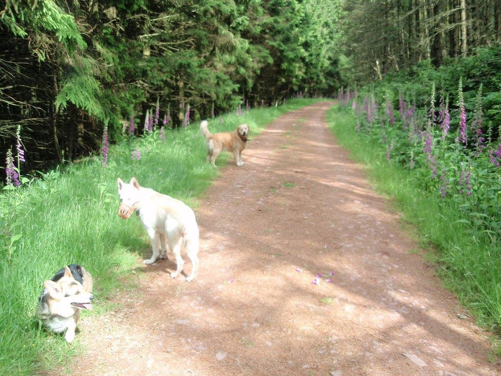 Dog Friendly Hotel Swansea Wales Craig y Nos Usk Reservoir forest path