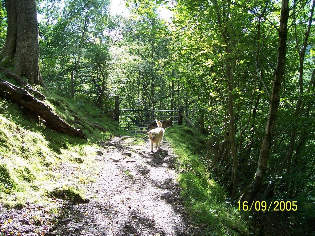 Dog Friendly Hotel Swansea Wales path behind Craig y Nos Country Park