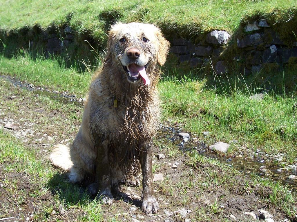 Dog Friendly Hotel Swansea Walks 07 - Dog Friendly Wales | Dog