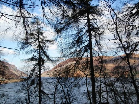Dog walking Wales -  Elan Village Reservoirs viewed through forest trees