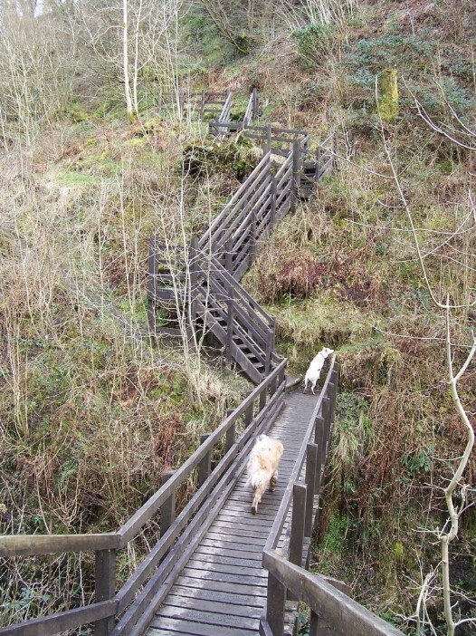 Henrhyd Waterfalls Dog Walk bridge over river