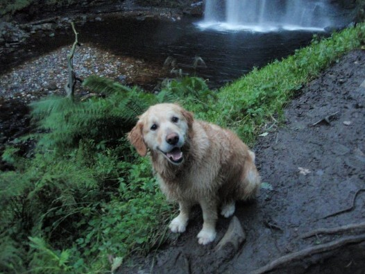 Henrhyd Waterfalls Jack the Dog