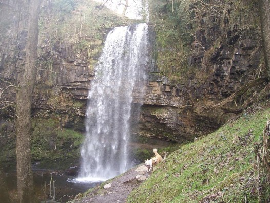 Henrhyd Waterfalls Dogs Walking