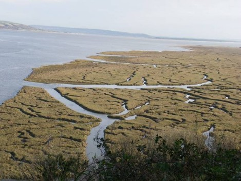 Dog Friendly B&B Wales - Laugharne Castle Coastal Walkwith views of coastal swamps and rivers