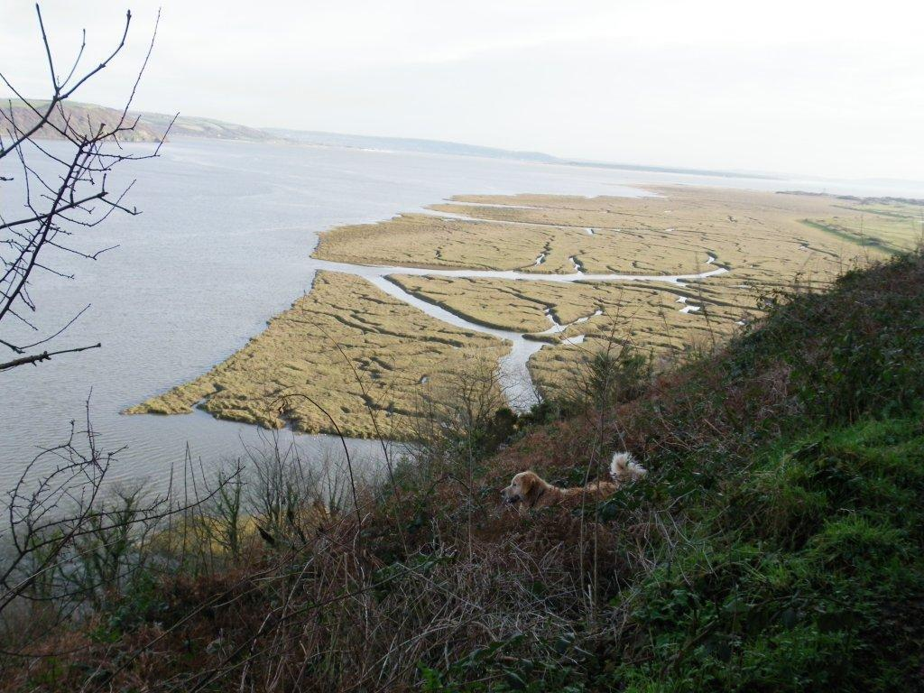 Laugharne Castle dog admires coastal path view Dylan Thomas Birthday Walk