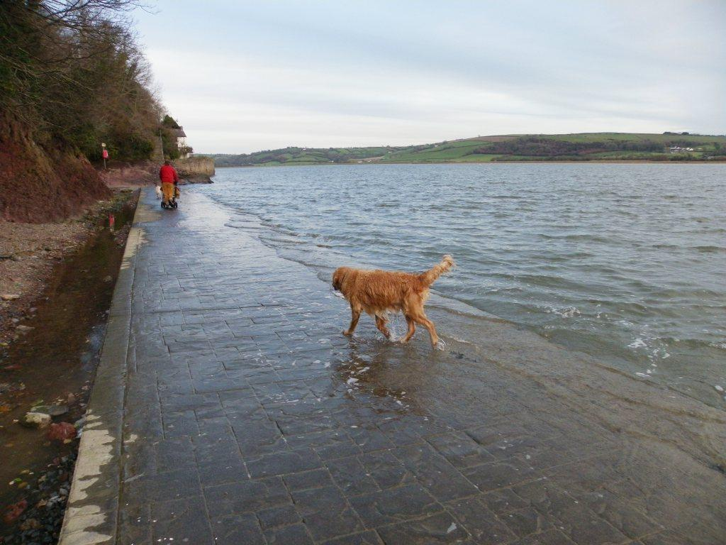 Laugharne Castle coastal path for dog walking