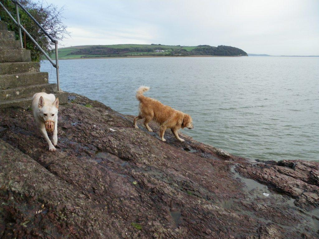 Laugharne Castle coastal path dogs walking from steps