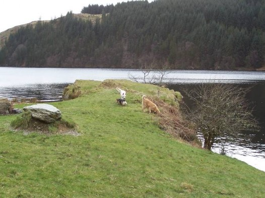 Dog friendly accommodation Wales - Llyn Brianne Reservoir dog walk pincnic area on peninsula