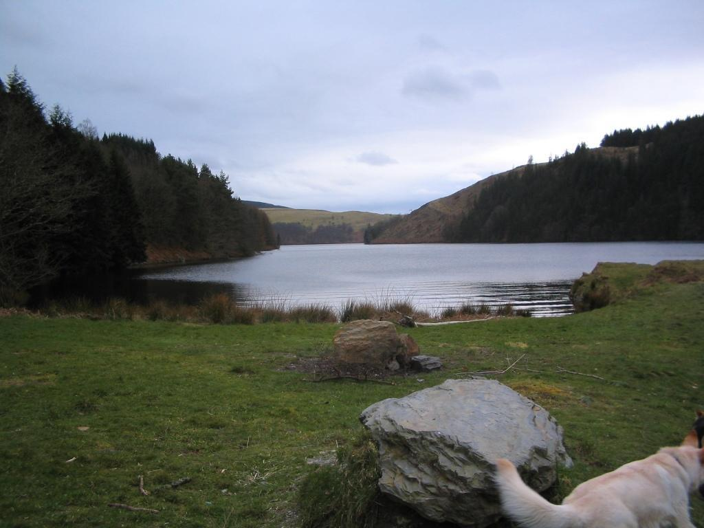 Llyn Brianne Reservoir dog walk picnic area
