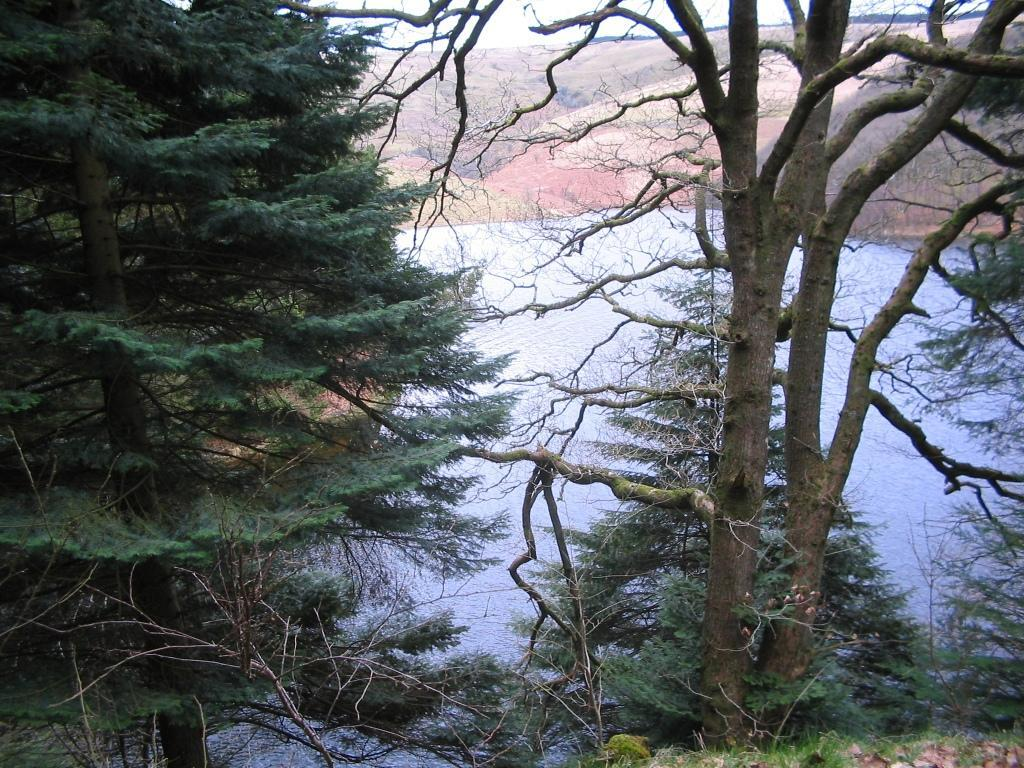 Llyn Brianne Reservoir through trees
