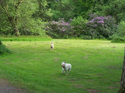 Dog Friendly hotel in Wales - Craig y Nos Castle Lower Gardens