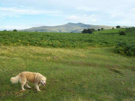 Dog walks near Craig y Nos Castle - Brecon Beacons Mountain Centre