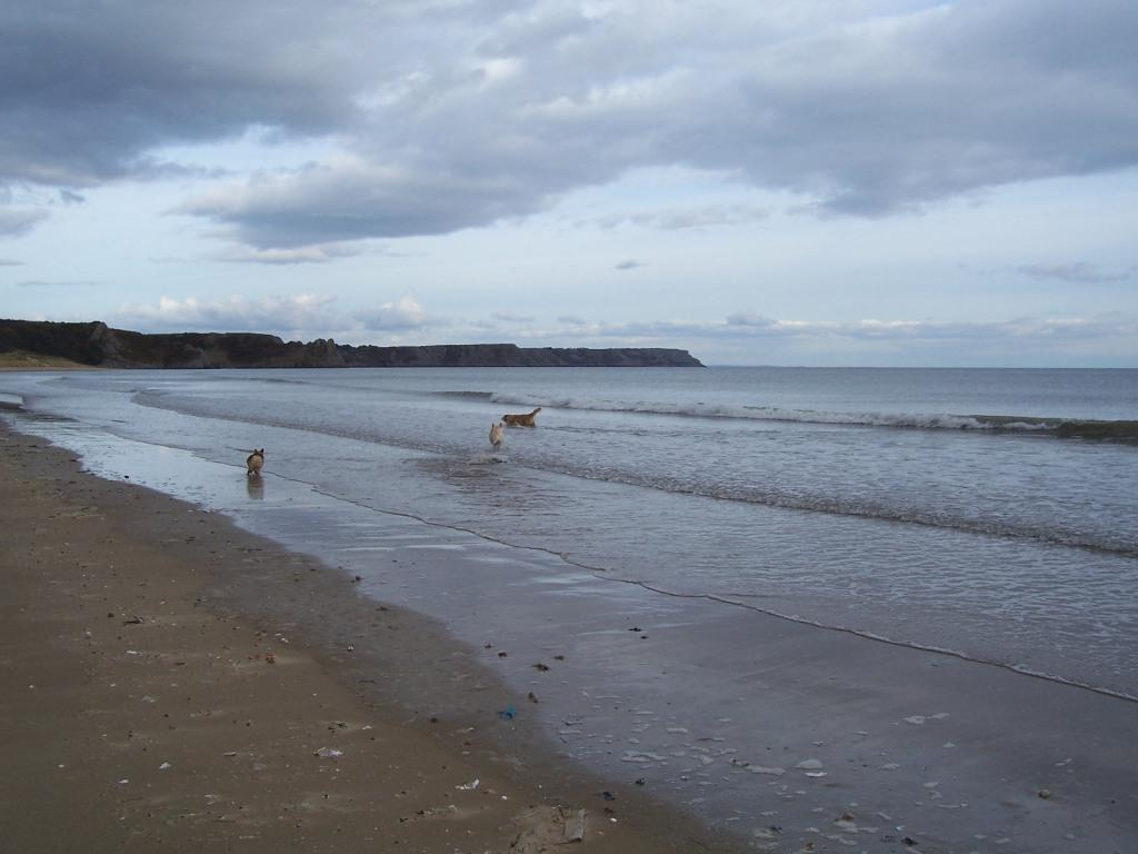 Oxwich Bay Beach Dog Walking and paddling in waves