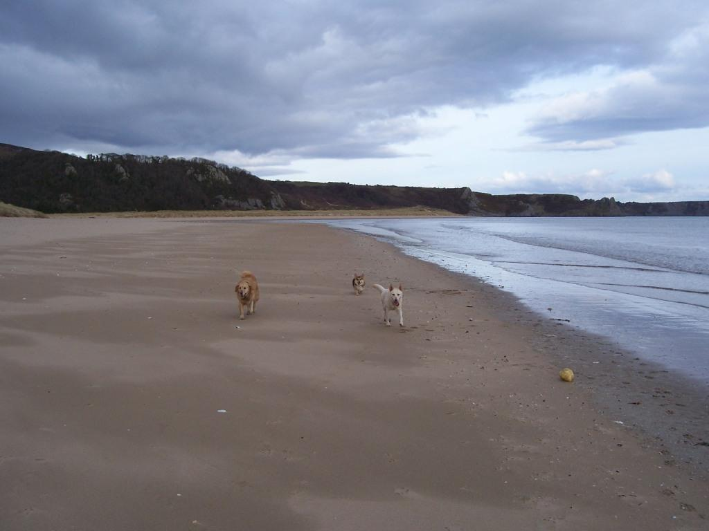 Oxwich Bay Dog Walks dogs walking on sandy beach
