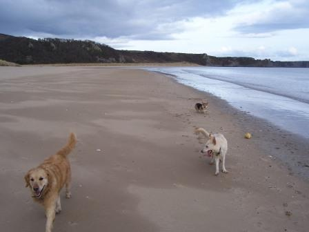 Dog walking near Craig y Nos Castle - Oxwich Bay Beach Walk