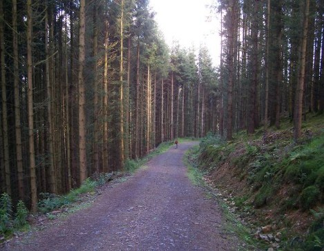 Dog Friendly B&B Wales - a dog's visit to Talley Abbey tall trees forest dog walk tracks