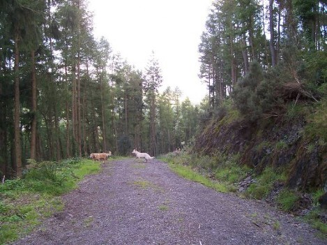 Dog Friendly B&B Wales - a dog's visit to Talley Forest with excellent circular dog walking tracks