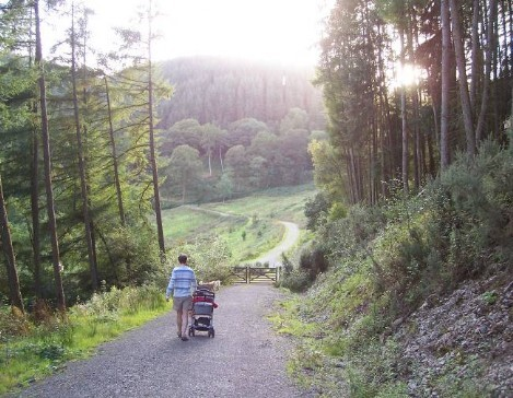 Dog Friendly B&B Wales - a dog's visit to Talley Forest pushing pram downhill on forest tracks