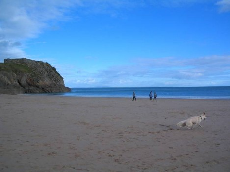 Dog Friendly B&B Wales - a dog's day out in Tenby, deserted beach for dogs to run free