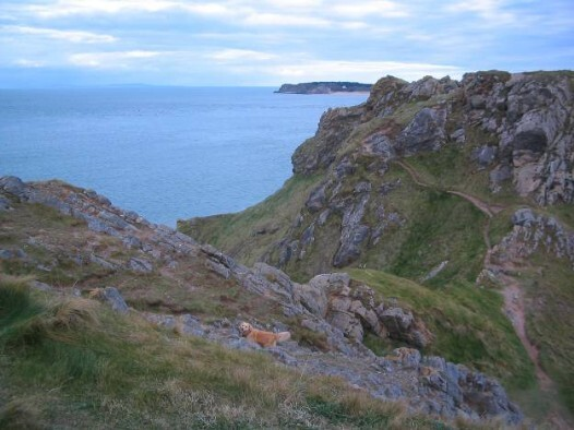 Dog Friendly B&B Wales - a dog's day out in Tenby views of the bay