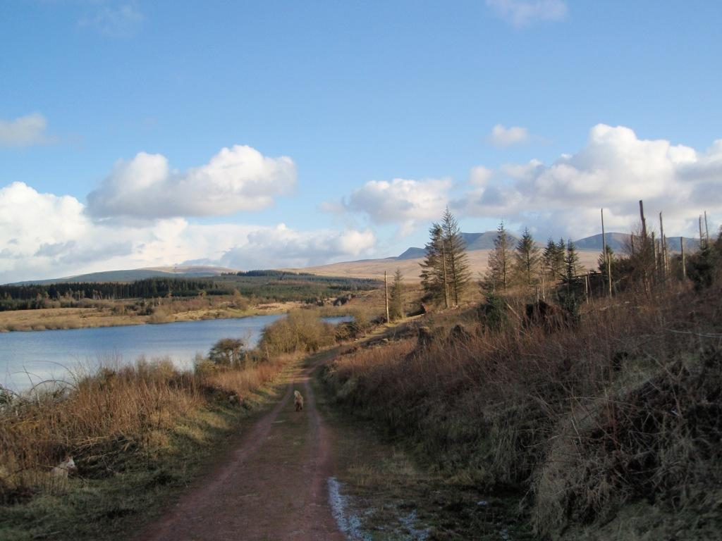 Usk Reservoir Circular Dog Walk paths and mountain scenery