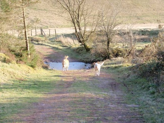 Dog friendly B&B Wales - Usk Reservoir Dog Walking tracks