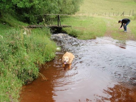 Dog friendly B&B Wales - Usk Reservoir Dog Walk crossing the stream