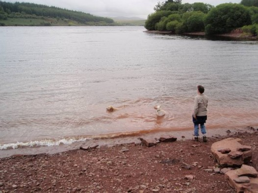 Dog friendly B&B Wales - Usk Reservoir Walk dogs paddling in water