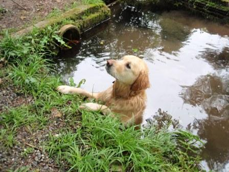 My Dog Friendly Shallow Pool Dog Bathing And Swimming Area Dog Friendly Wales